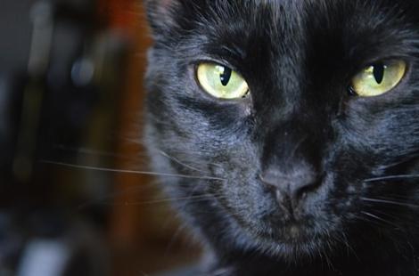 black-cat-